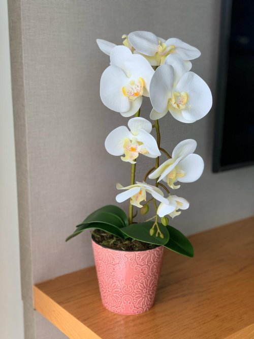 Orquídea branca no vaso rosa antigo