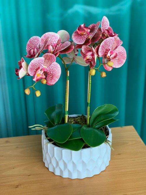 Orquídea rosa pintada no vaso branco