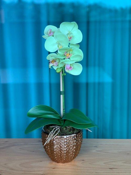 Orquídea verde água no vaso dourado