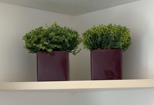 Vaso berinjela com verdinho