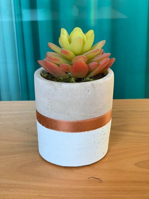 Vaso concreto branco/bronze com suculenta vermelha