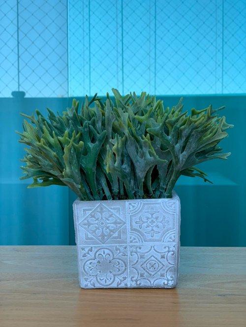 Vaso quadrado com chifre de veado